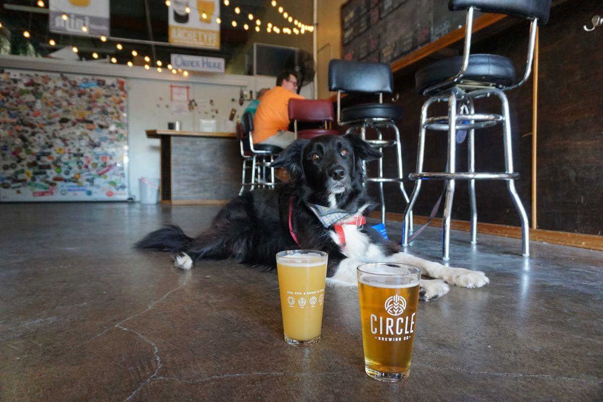 dog friendly restaurants austin