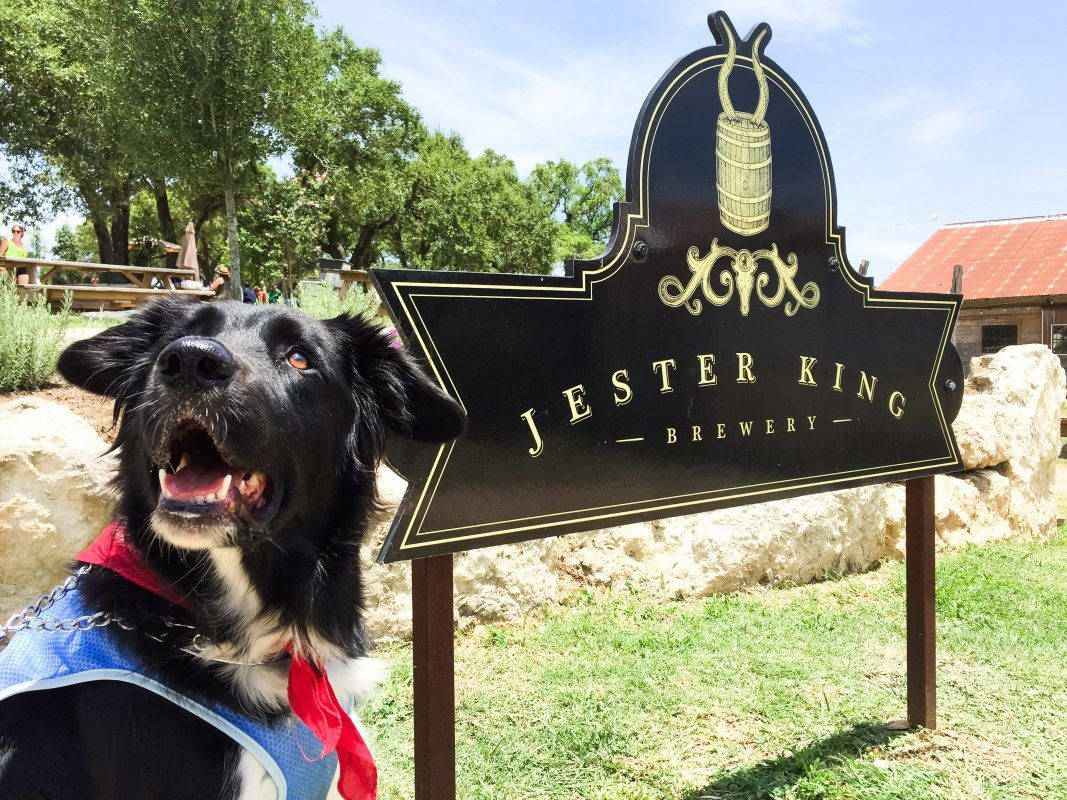 Spider House Austin Dog Friendly