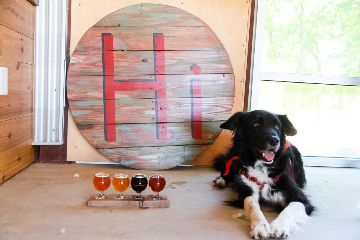 dog friendly brewery