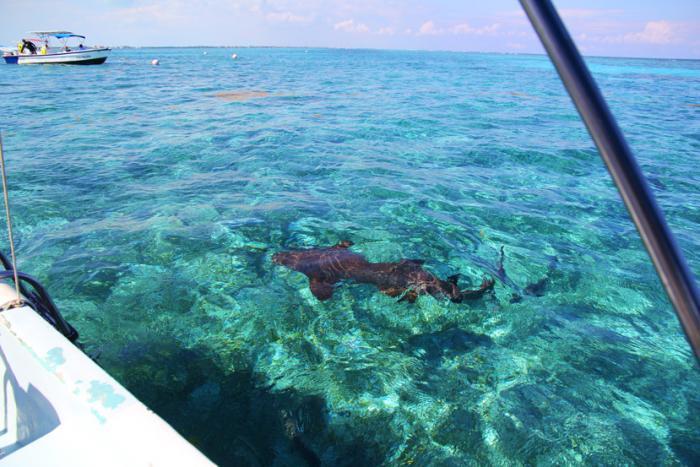 caye caulker belize snorkeling