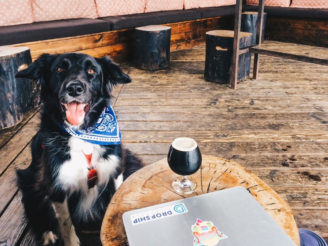 dog friendly places austin