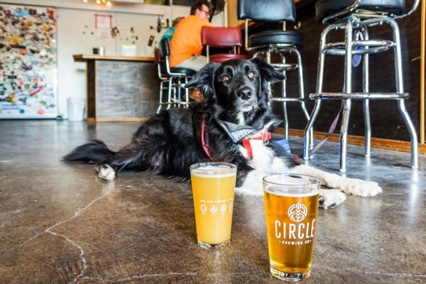 dog friendly brewery