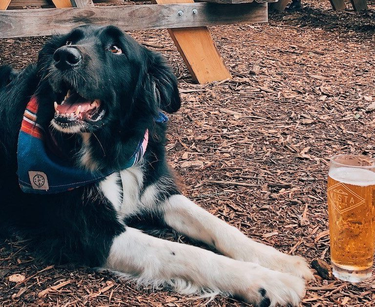 2020 austin dog friendly guide