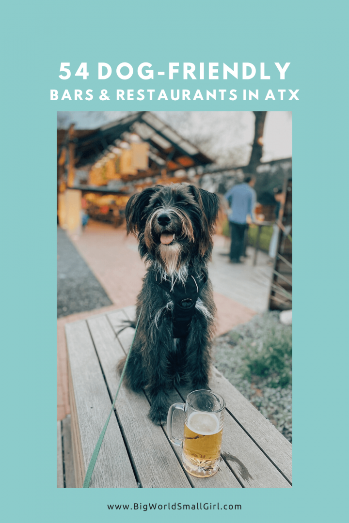 dog friendly guide austin 1