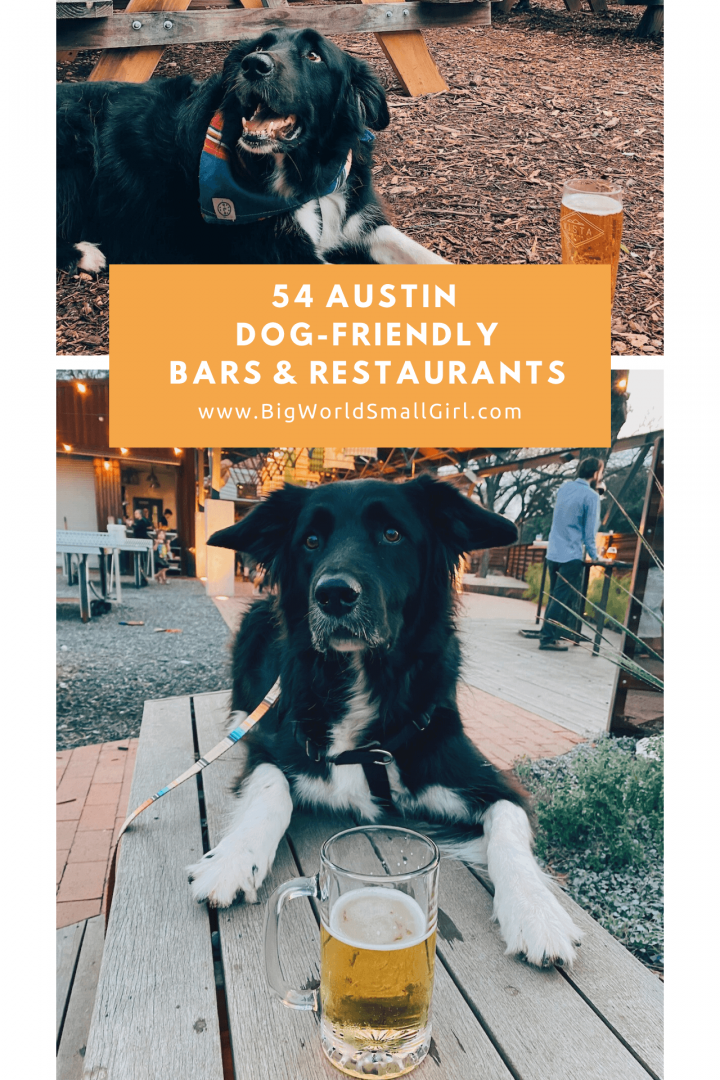 dog friendly guide austin 2