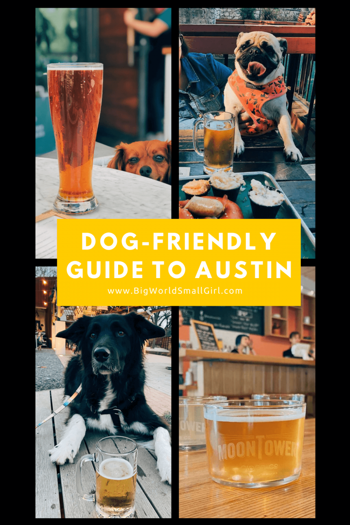 dog friendly guide austin 3