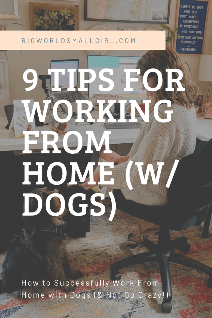 9 Tips for Working From Home (with Dogs)